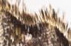 Undersidan en fjärilsvingeD16297 tumnagel